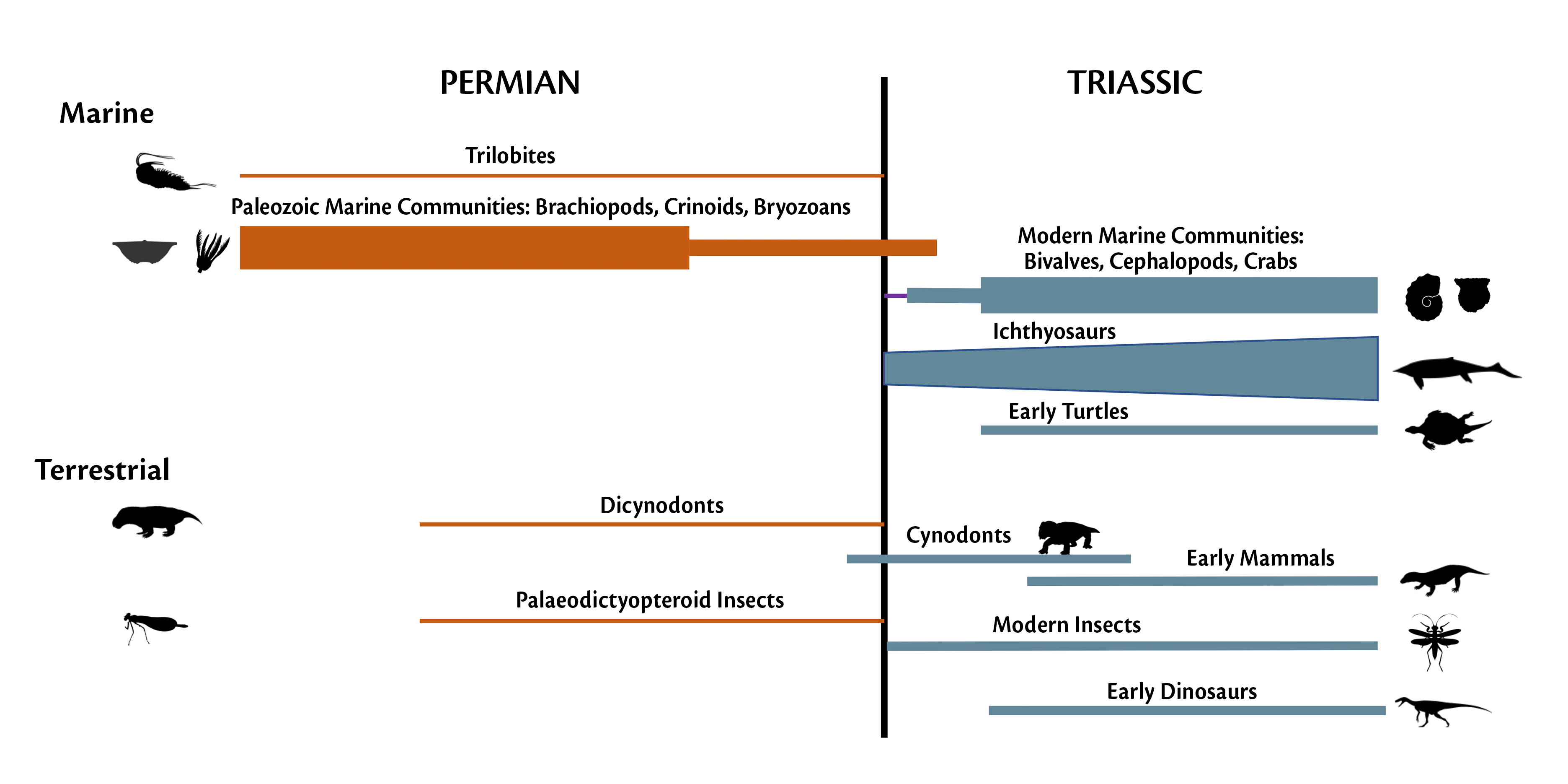 Figure: The disappearance of some Permian groups and appearance of some modern groups. Images from Phylopict.org.